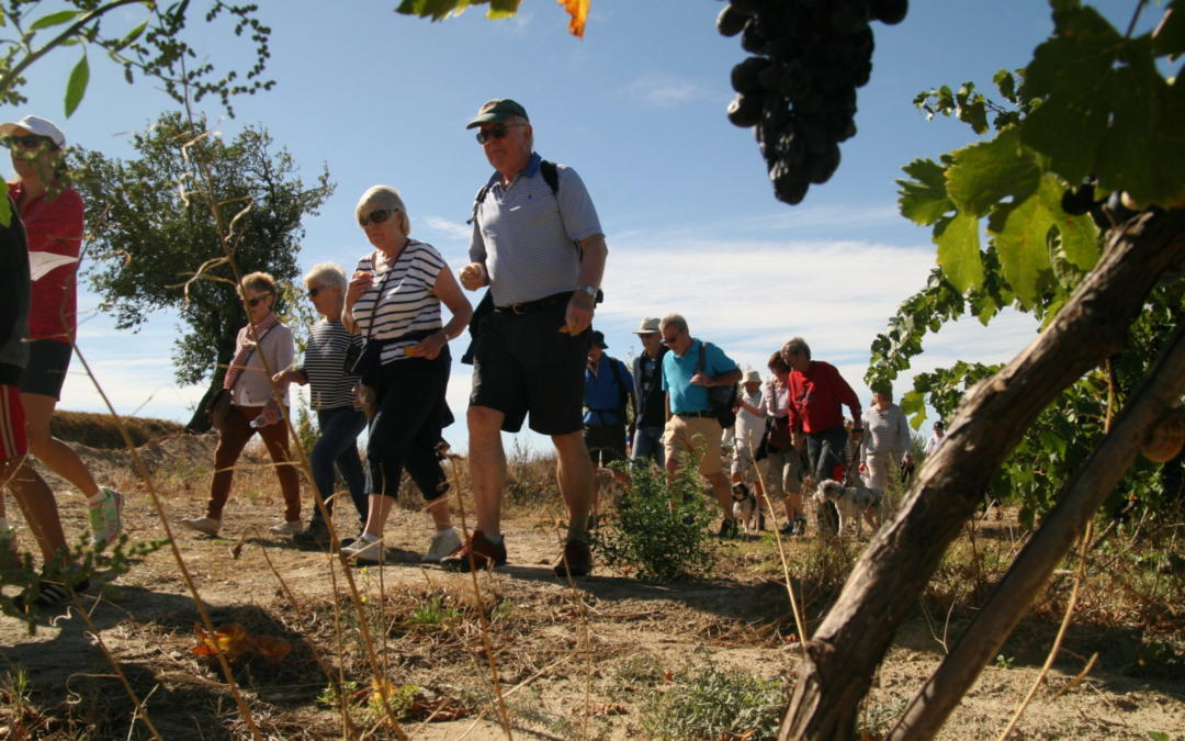 Walk for Life, Wine and Community