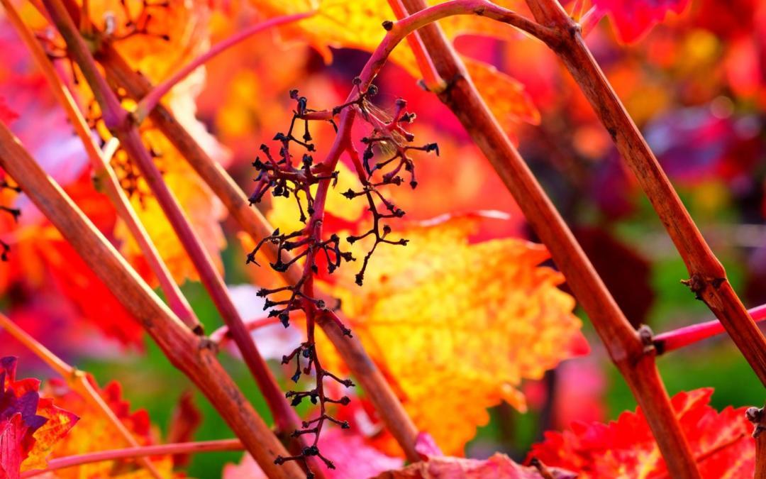Autumn Photo Contest