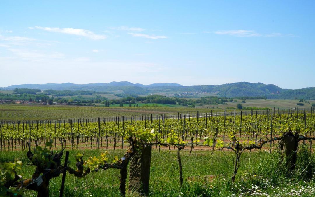 Wine, wine! My kingdom for some wine …